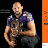 Baltimore Raven Jarret Johnson and Tucker poster